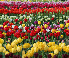 thousand-flowers