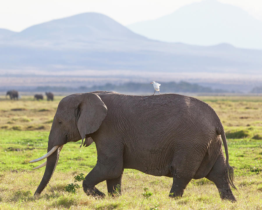 Elephants Egrets And Healthcare Partnerships Chilmark Research